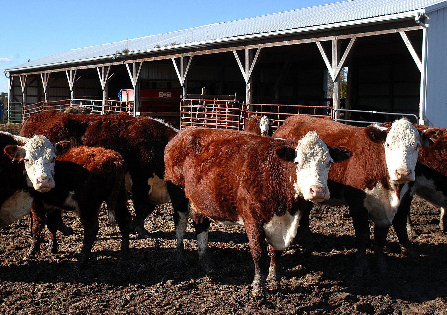Unhappy with Prices, Ranchers Look to Build Own Meat Plants